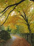 Autumn Colours Near Grasmere  Lake District National Park  Cumbria  England  UK