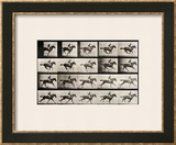 """Jockey on a Galloping Horse  Plate 627 from """"Animal Locomotion """" 1887"""
