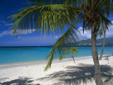 Palm Tee and Beach  Grand Anse Beach  Grenada  Windward Islands  Caribbean  West Indies