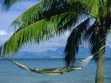 Hammock  Tahiti  Society Islands  French Polynesia  South Pacific Islands  Pacific