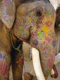 Painted Elephant  Close up of Head  Jaipur  Rajasthan  India