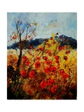 Red Poppies in Provence 45