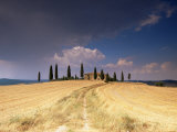 Cottage and Cypress Trees Near Pienza  Val d'Orcia  Siena Province  Tuscany  Italy  Europe