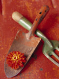 Trowel and Blossom