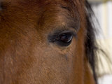 Closeup of a Horse's Eye