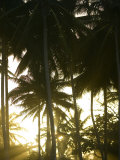 Afternoon Sunlight Through Palm Trees