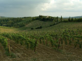 Chianti Vineyards in Tuscany  Italy