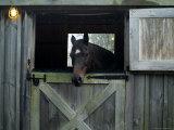 Brown Horse in a Barn  Block Island  Rhode Island