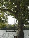 Empty Tree Rope Swing over Water  Belize
