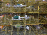 Crab Traps and Buoys Stacked on Chesapeake Bay Pier