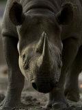 Rhinoceros at the Sedgwick County Zoo  Kansas