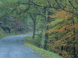 Road in the Blue Ridge Mountains  Virginia