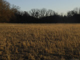 Prairie Grasses near a Wooded Area in Oklahoma