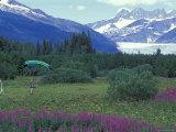 Paraglider Landing in a Field near the Mendenhall Glacier  Alaska