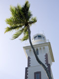 Lighthouse with Palm Tree  French Polynesia