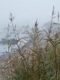 Looking Through Sea Grass to a Rocky Beach in the Fog  Block Island  Rhode Island