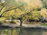 Pond and Autumn Trees in Central Park  New York