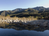 Reflection of the Santa Ynez Mountains in Matilija River  California