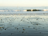 Pebbles in Wet Sand with Small Waves and Sail Boat in the Background  California