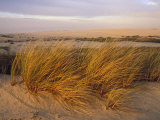 Sand Dunes at Oso Flaco Nature Conservancy  Pismo Beach  California