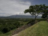 Tree and Mayan Ruins of Tonina  Mexico