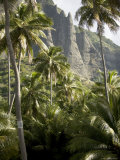 Scenic View of Coconut Palm Trees and Mountains  Anaho Bay  French Polynesia