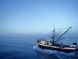 Shrimp Boat in the Gulf of Mexico