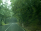 View Through Window of a Car Driving on a Tree Lined Road in the Rain  Tuscany  Italy