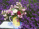 Roses on a Stool in a Field of Lavender