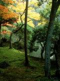 Garden of Moss in Saihoji Temple