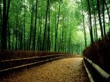 Bamboo Lane  Nishiyama  Kyoto  Japan