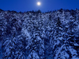 Moon Over the Winter Forest