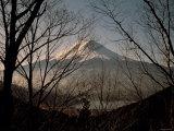 Mt Fuji Beyond Trees