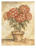 Potted Red Hydrangea
