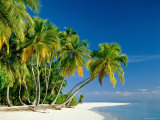 Palm Trees and Tropical Beach  Maldive Islands  Indian Ocean