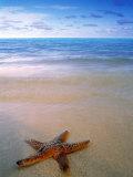 Starfish on Beach  Maldives