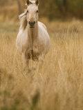 Horse  Montana  USA