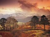 Borrowdale  Lake District  Cumbria  England