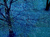 Autumn Tree in Blue, Green, and Purple Papier Photo par Robert Cattan