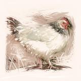 Light Sussex Hen