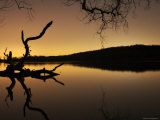 Gnarled Branches Poking out of Calm Lake