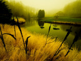 Golden Plant Growth along Peaceful River