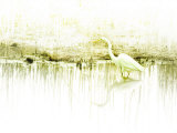 Crane Standing in Shallow Waters