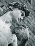 Statue of David  Florence  Tuscany  Italy