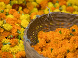 Flower Market  Calcutta  West Bengal  India