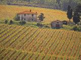 Vineyard  Greve in Chianti  Tuscany  Italy