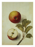 Botanical Study of an Apple