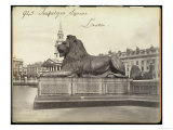 Stone Lion  Trafalgar Square  London  19th Century