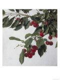 Cherries  c1883