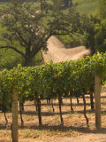 Hess Collection and Winery Vineyard View  Napa Valley  California